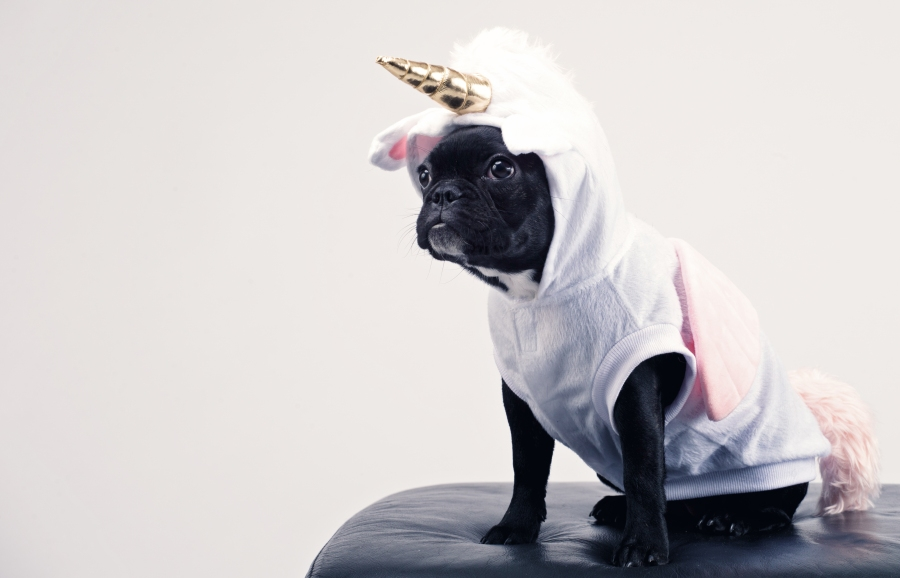 boston-terrier-wearing-unicorn-pet-costume-1564506